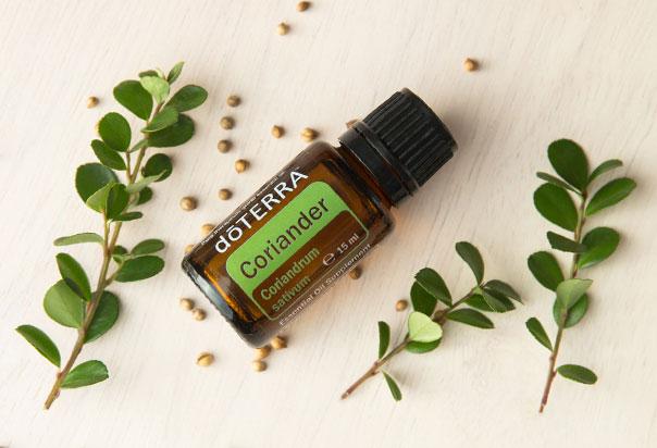 doTera eterično olje semen koriandra, Coriander